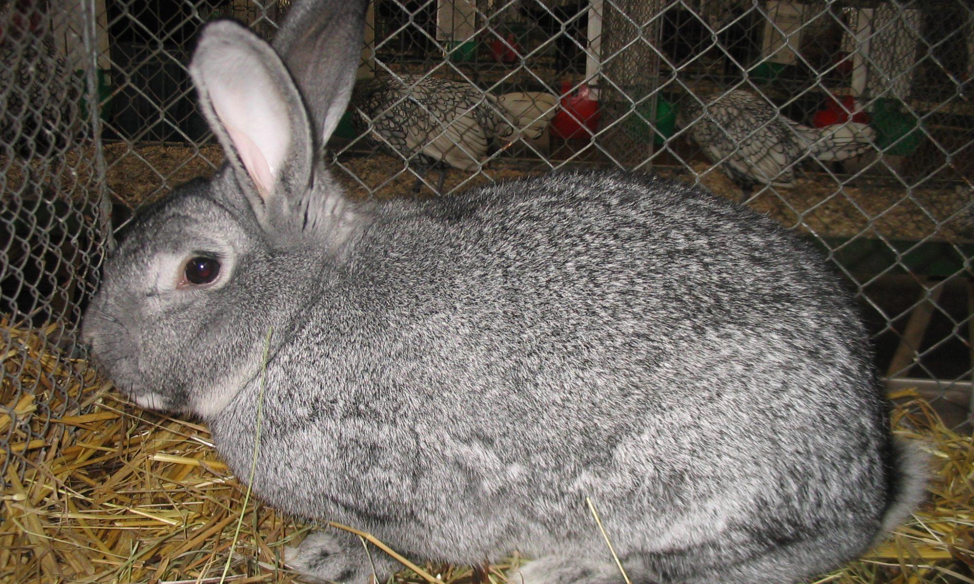 rabbit harvest walk-in cooler
